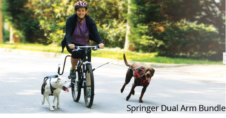 Best Reviews Springer Dog Exerciser